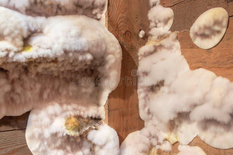 Weißer gelber flaumiger Formpilz auf hölzernem Brett im Keller, Dachboden, Keller im Wohngebäude lizenzfreies stockfoto