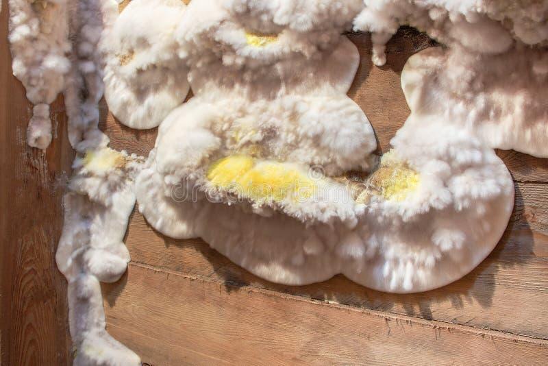 Weißer gelber flaumiger Formpilz auf hölzernem Brett im Keller, Dachboden, Keller im Wohngebäude lizenzfreie stockfotografie