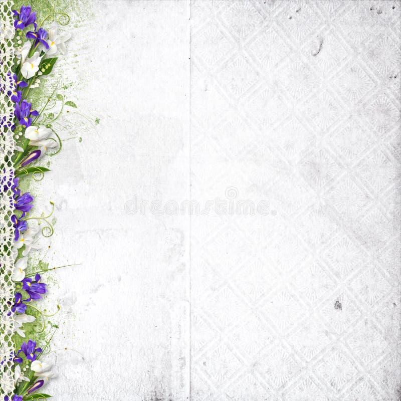 Weißer Hintergrund mit purpurroten Frühlingsblumen stock abbildung