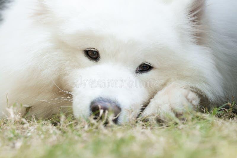 Weißer Hund stockfoto