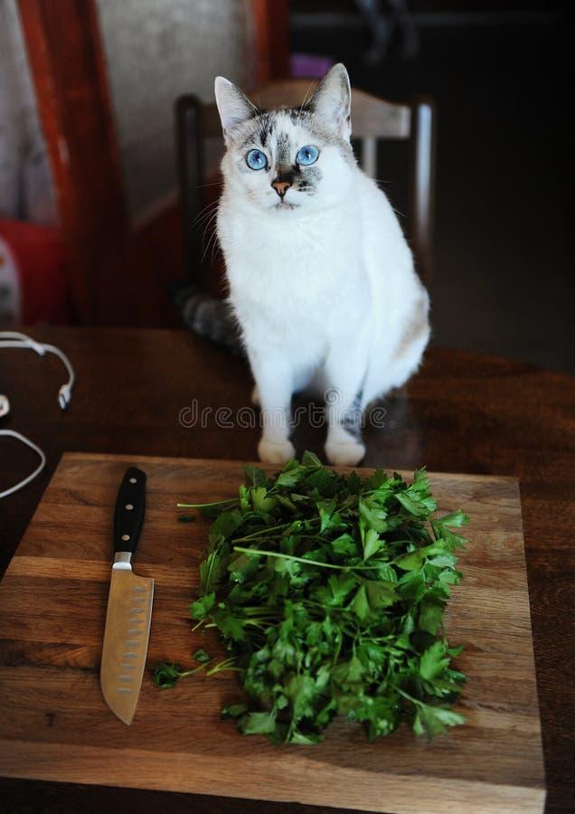 Weißer Katzenkoch und neue Grüns auf einem hölzernen Schneidebrett, Messer mit einem schwarzen Griff lizenzfreie stockfotos