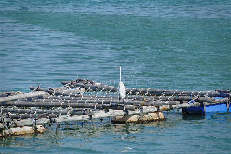Weißer Lang-Hals-Vogel, der auf dem Floss schwimmt auf das Meer steht lizenzfreie stockbilder