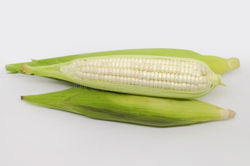 Weißer Mais-Mais lizenzfreie stockfotografie