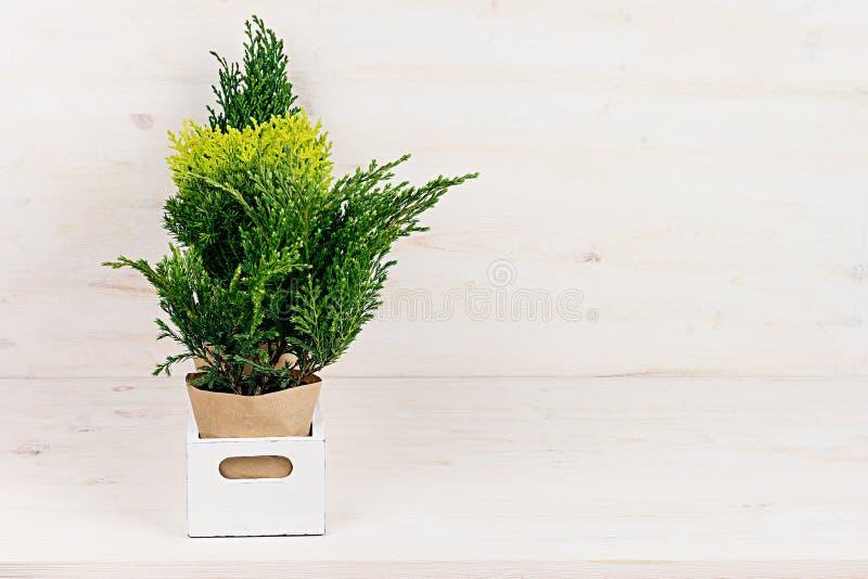 Moderne Grünpflanzen weißer moderner minimalistic innenraum mit jungen grünpflanzen im