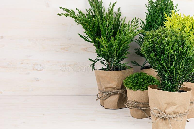Moderne Grünpflanzen weißer moderner rustikaler innenraum mit jungen grünpflanzen in den