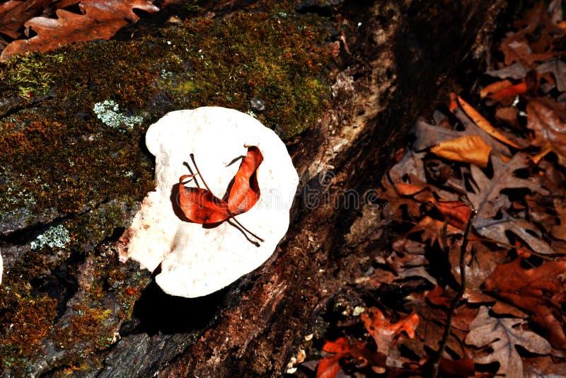 Weißer Pilz stockbilder