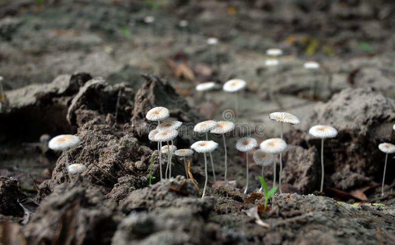 Weißer Pilz lizenzfreie stockfotografie