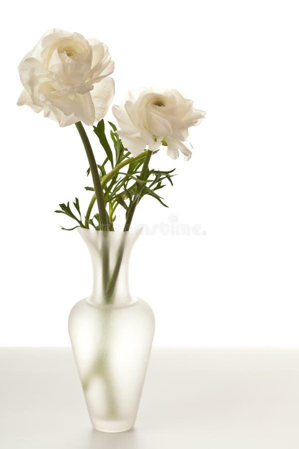Weißer Ranunculus im Vase lizenzfreie stockfotografie