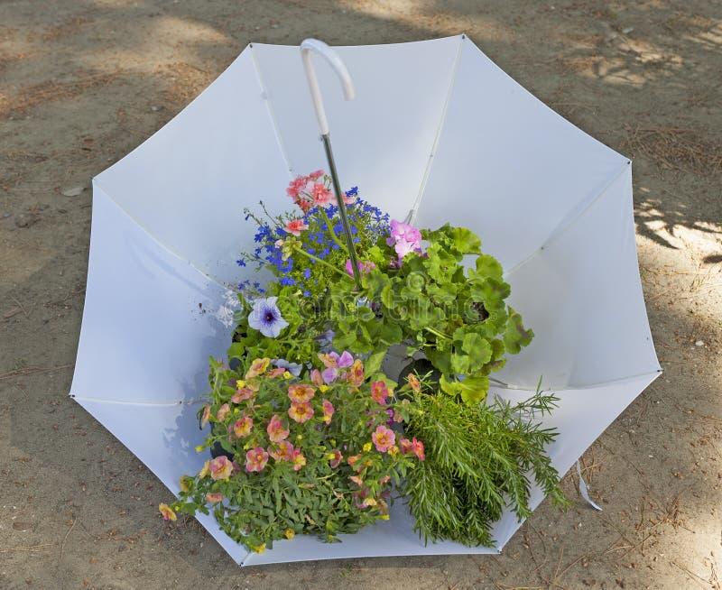 Weißer Regenschirm mit Blumen und Anlagen stockbilder