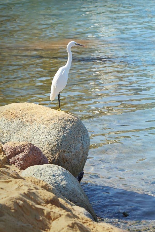 Weißer Reiher auf dem Stein auf einem Seeufer lizenzfreie stockfotografie