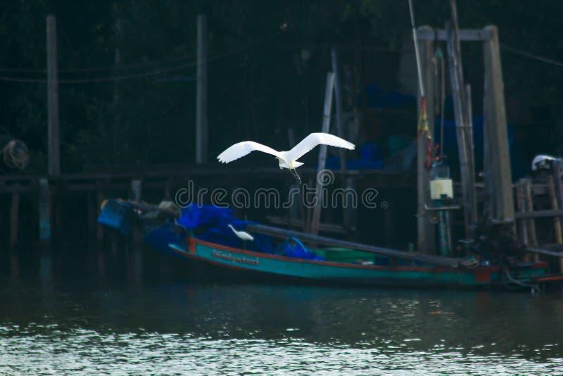 Weißer Reiher, der über die Oberfläche fliegt stockfoto