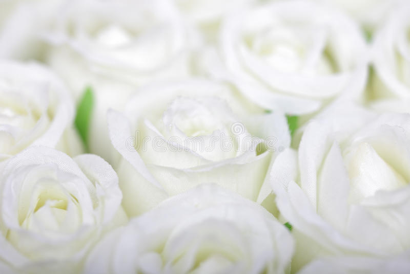 Weißer Rosehintergrund lizenzfreie stockfotografie