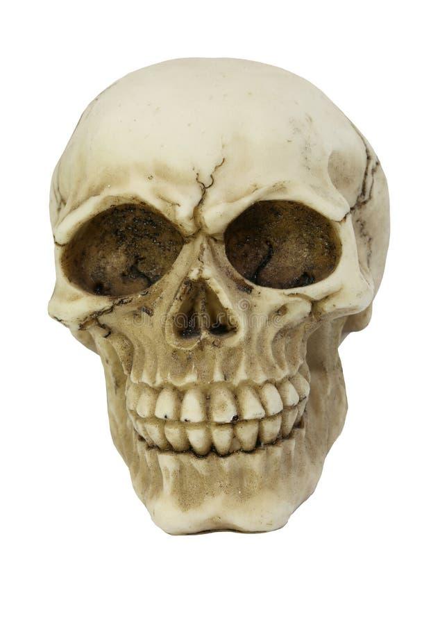 Weißer Schädel mit Sprüngen lizenzfreies stockfoto