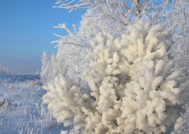 Weißer schöner Schnee auf den Niederlassungen bedeckt die Bäume im Winter im sibirischen Wald lizenzfreie stockfotos