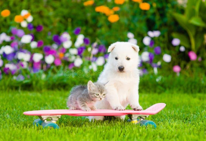 Weißer Schweizer Schäfer ` s Welpe und Kätzchen der getigerten Katze auf Rochen lizenzfreies stockbild