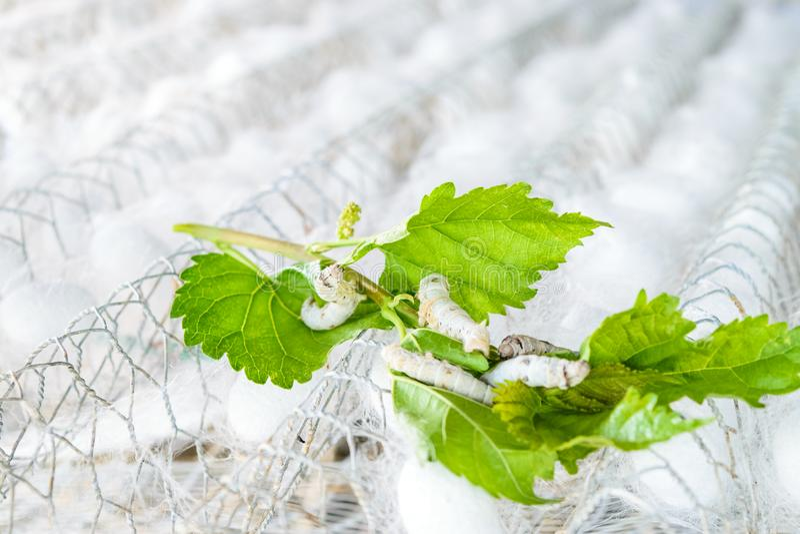 Weißer silk Kokon lizenzfreie stockfotos