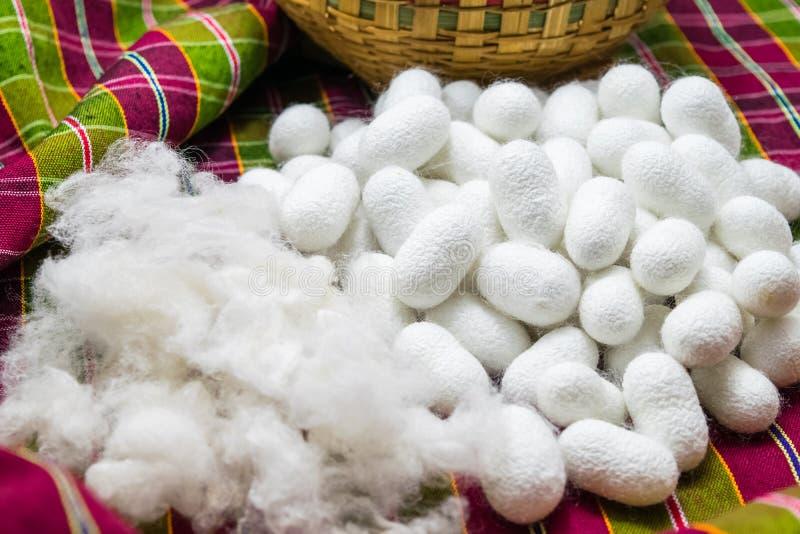Weißer silk Kokon lizenzfreies stockfoto