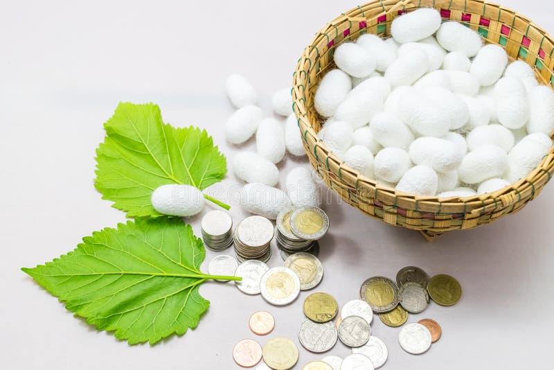 Weißer silk Kokon lizenzfreies stockbild