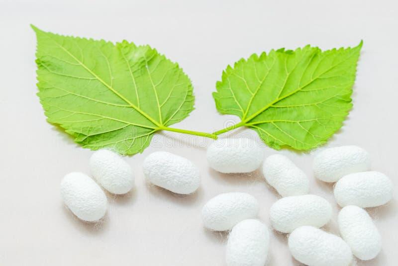 Weißer silk Kokon lizenzfreie stockfotografie
