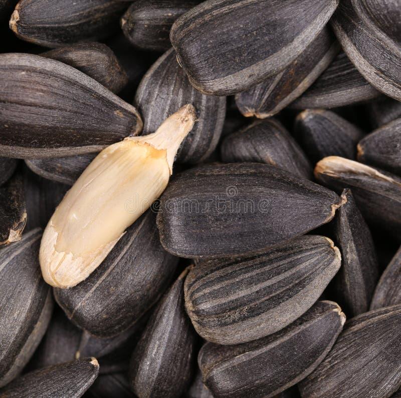 Weißer sinflower Samen auf schwarzen Samen. lizenzfreies stockbild