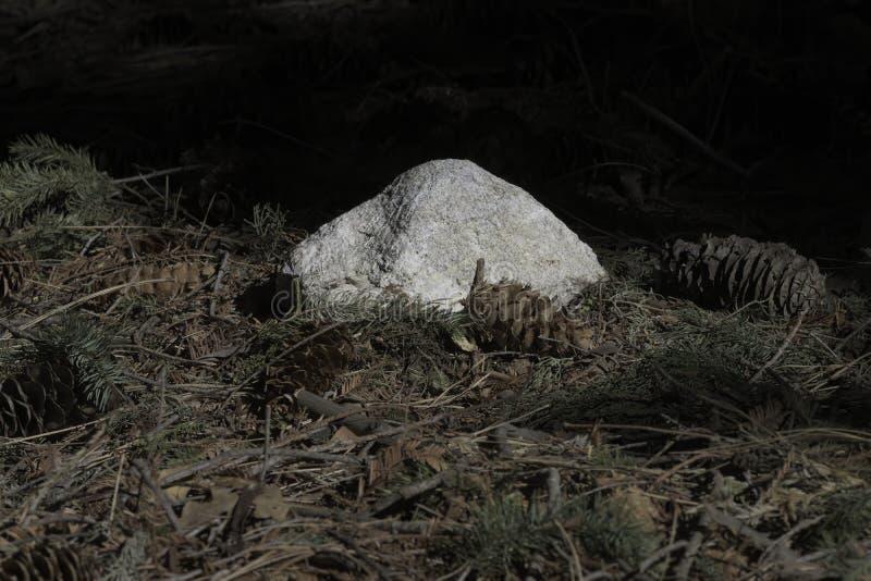Weißer Stein in den Nadeln lizenzfreies stockbild