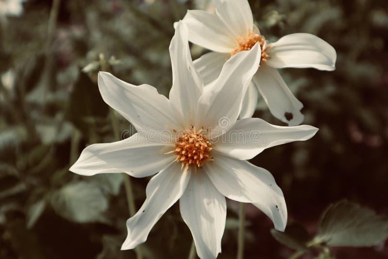 Weißer und gelber schöner Blumenhintergrund stockbilder