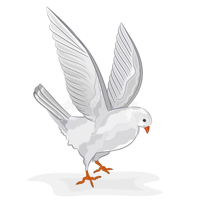 Weißer Vektor der Taube im Flug lizenzfreie abbildung