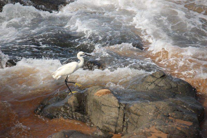 Weißer Vogel im Ozean lizenzfreie stockfotografie