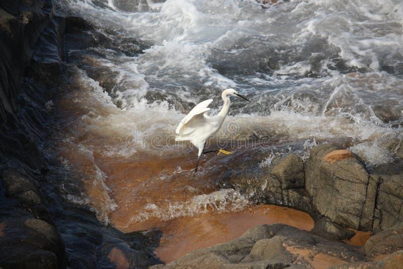 Weißer Vogel im Ozean lizenzfreies stockbild