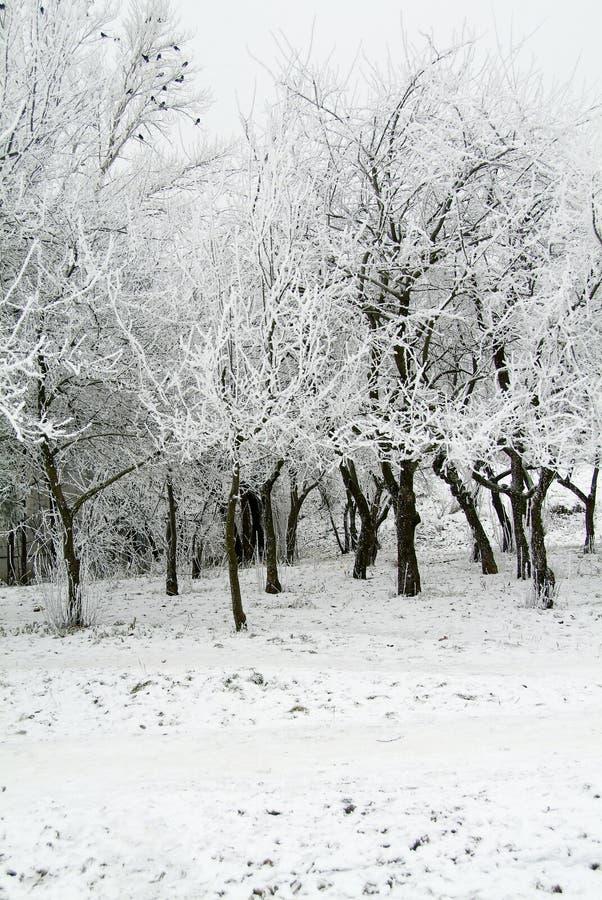 Weißer Wald stockfoto