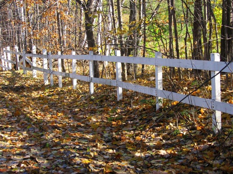Weißer Zaun hergestellt vom Holz nahe dem Holz und der Straße bedeckt von den Blättern während der Fall-Vorratfotos lizenzfreie stockfotografie