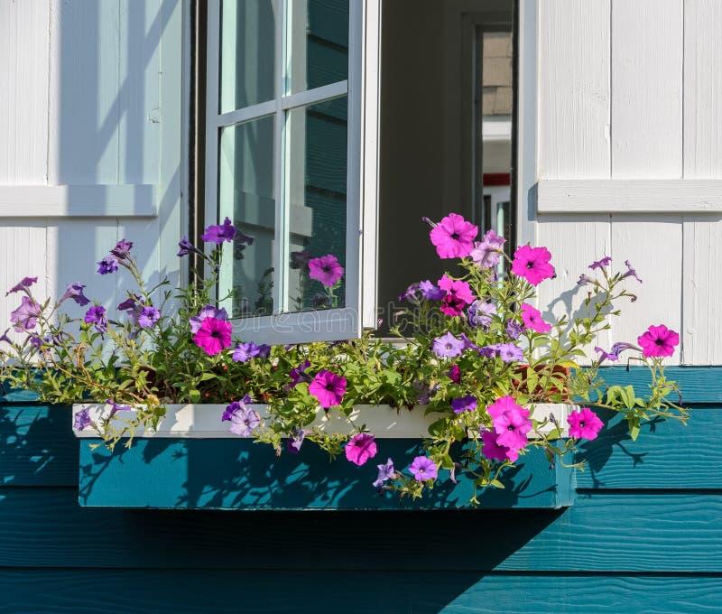Weißes Fenster verziert mit Petunienblumenkasten lizenzfreies stockbild