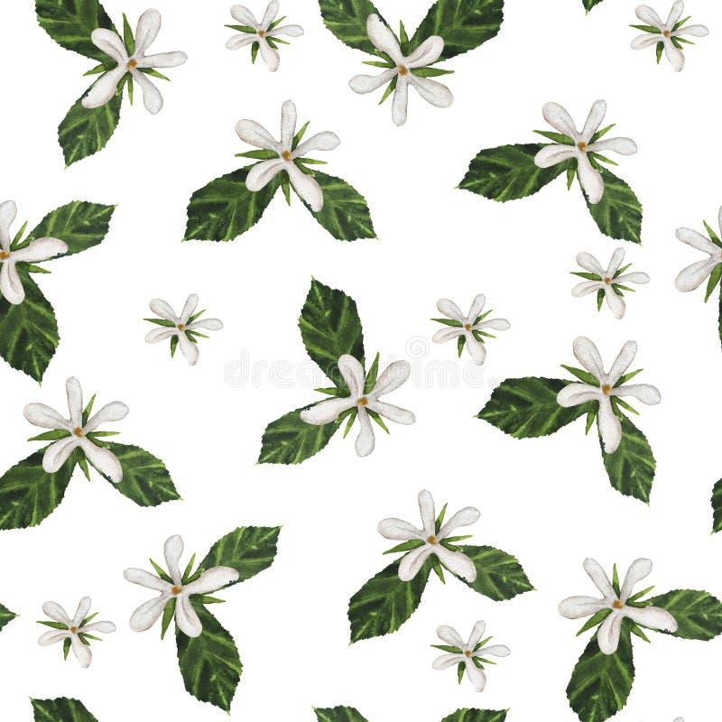 Weißes Gartenblüten-Sommermuster Hand gezeichnete Abbildung stockbild