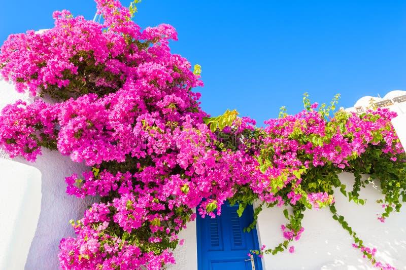Weißes Gebäude mit blauer Tür und rosa Blumen lizenzfreie stockbilder