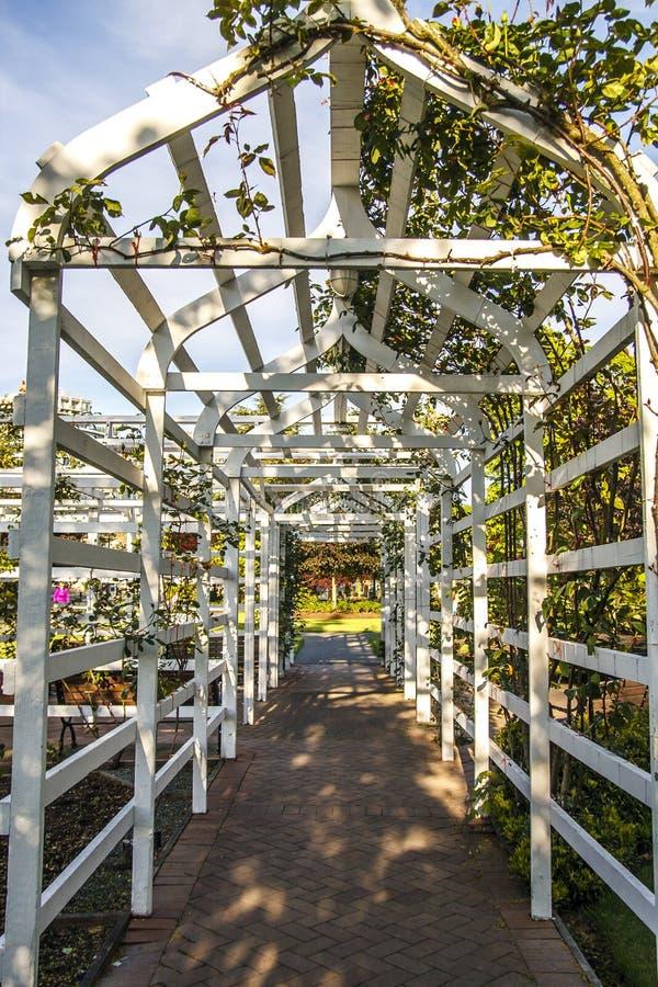 Weißes hölzernes Gitter im Rosengarten lizenzfreie stockfotografie