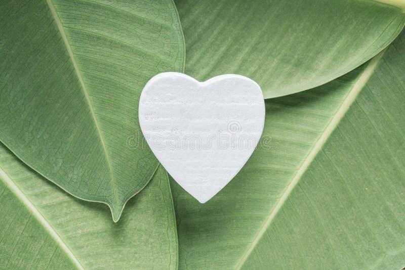 Weißes hölzernes Herz auf Ficusblättern lizenzfreie stockfotos