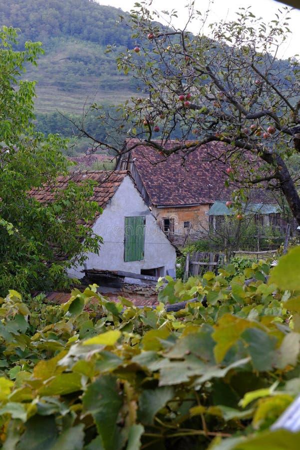 Weißes Haus im Garten des sächsischen Dorfs, Siebenbürgen, Rumänien lizenzfreie stockfotografie
