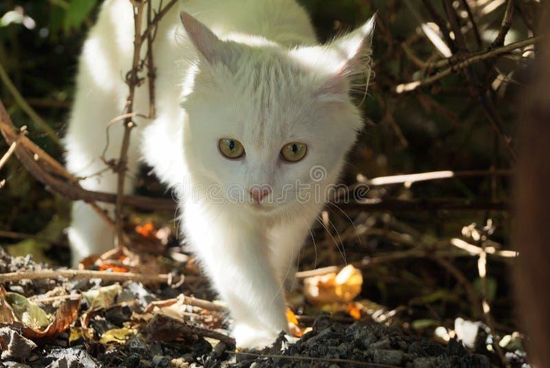 Weißes Kätzchen, das aus den Grund unter den trockenen Niederlassungen von Anlagen im Garten geht lizenzfreies stockbild