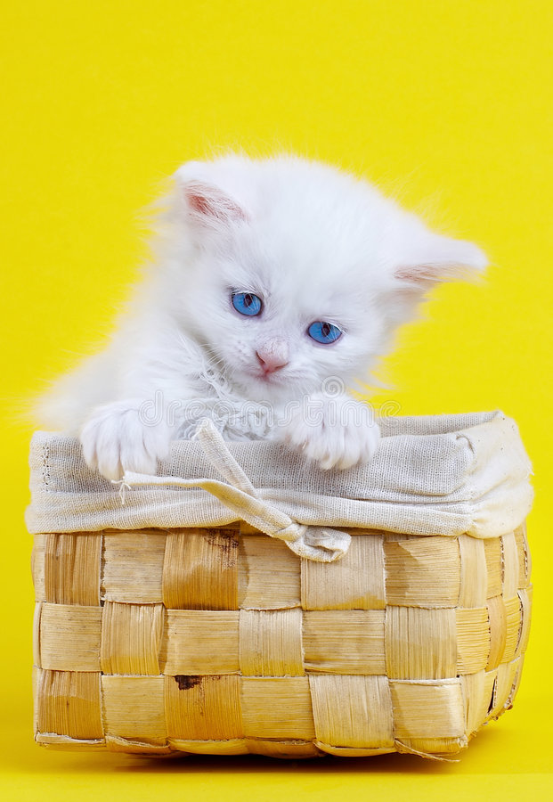 Weißes Kätzchen in einem Korb. stockfotos