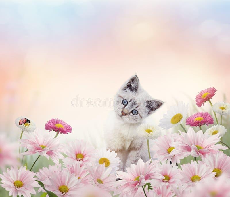 Weißes Kätzchen im Blumengarten lizenzfreie stockfotografie