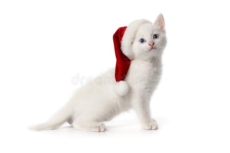 Weißes Kätzchen mit blauen Augen und Weihnachtshut stockbilder