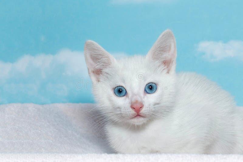 Weißes Kätzchen mit schönen blauen Augen stockfotos