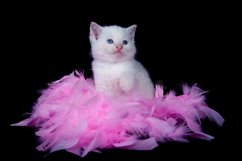 Weißes Kätzchen und rosafarbene Federn lizenzfreie stockfotografie