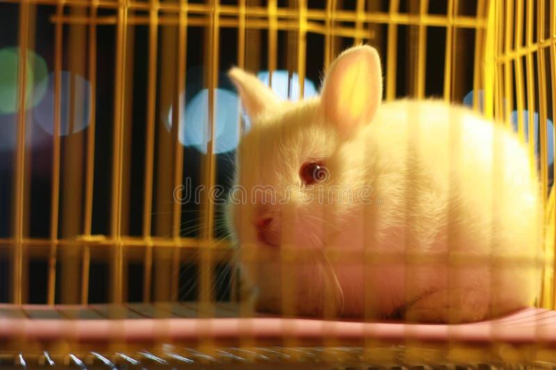 Weißes Kaninchen stockbild