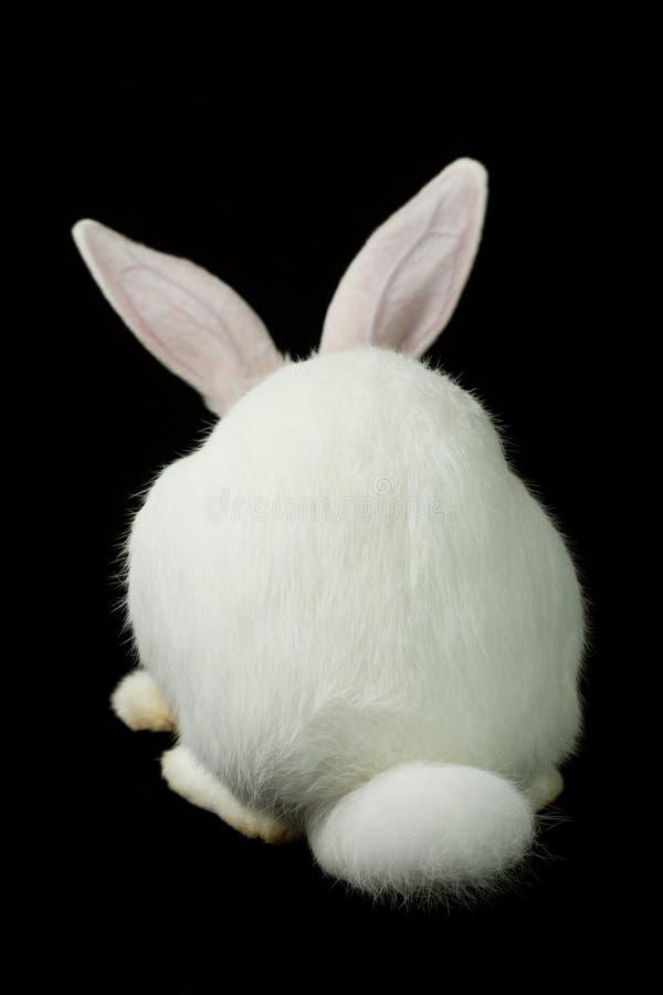 Weißes Kaninchen auf einem schwarzen Hintergrund lizenzfreie stockfotografie