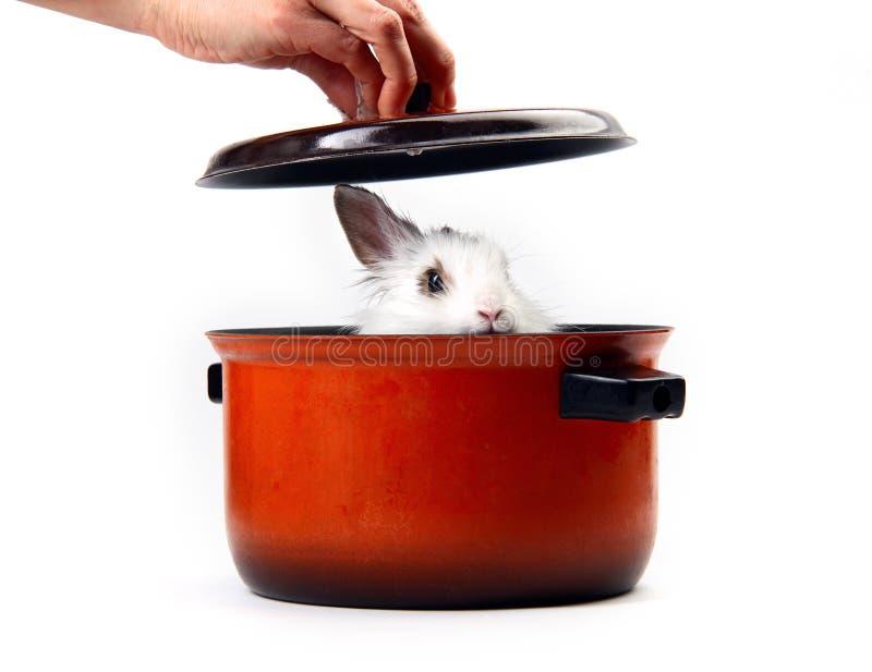 Weißes Kaninchen in der Kasserolle stockbild