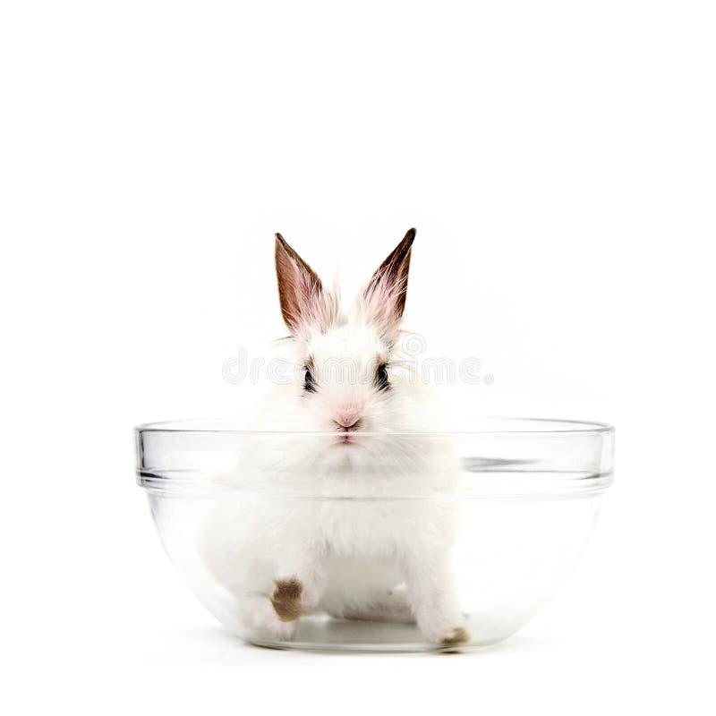 Weißes Kaninchen in der Salat-Schüssel stockfoto