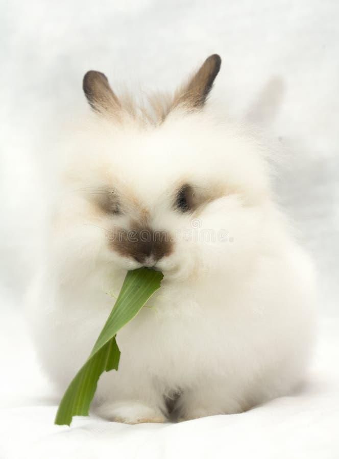 Weißes Kaninchen isst grünes Blatt lizenzfreie stockfotografie