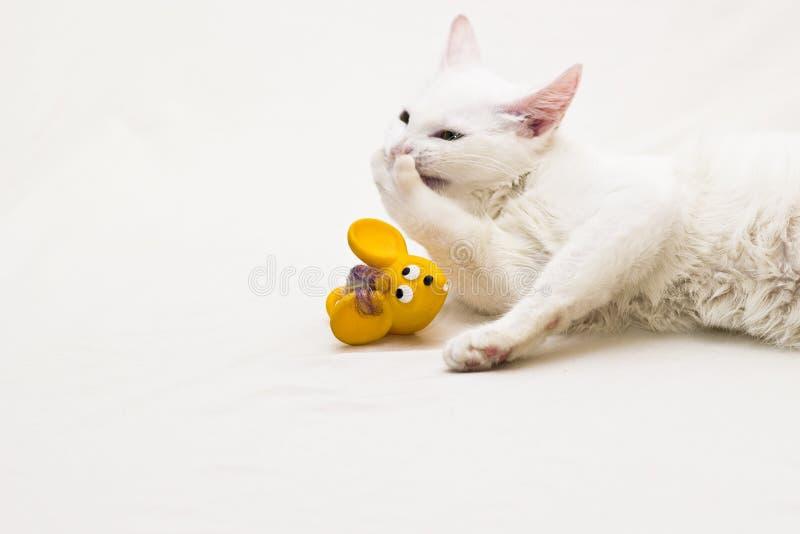 Weißes Katzenlachen stockfoto