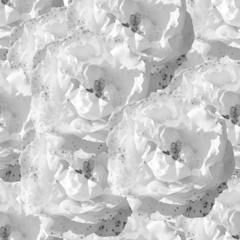 Weißes nahtloses einfarbiges Muster mit Rosen lizenzfreie abbildung